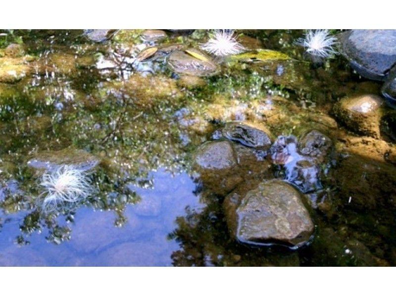 【沖縄・西表島】西表島のてっぺん古見岳へ!トレッキングツアーの紹介画像