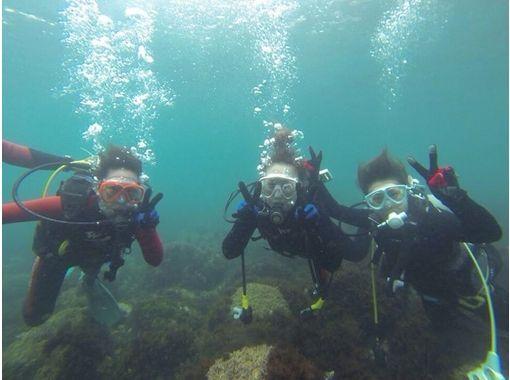 【熊本・天草】魚たちと一緒に泳いでみよう!イルカウォッチング&ダイビング