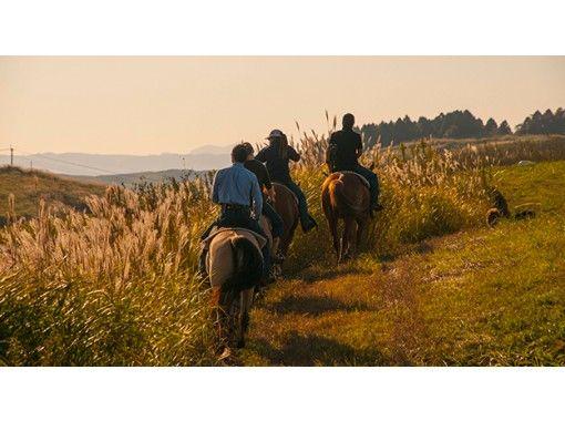 【熊本·阿苏】只要你能在草地上看到骑马徒步的经验!狂野西部课程(约30分钟)の紹介画像