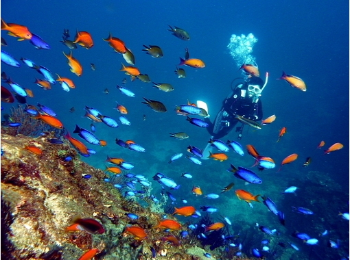 【奈良・生駒】近くの海で日帰り体験ダイビング!