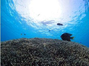宮古島ダイビングショップ カピリナの画像