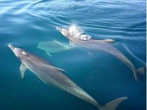 Dolphin Cruise(ドルフィンクルーズ)の画像