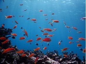 スローダイブ石垣島の画像