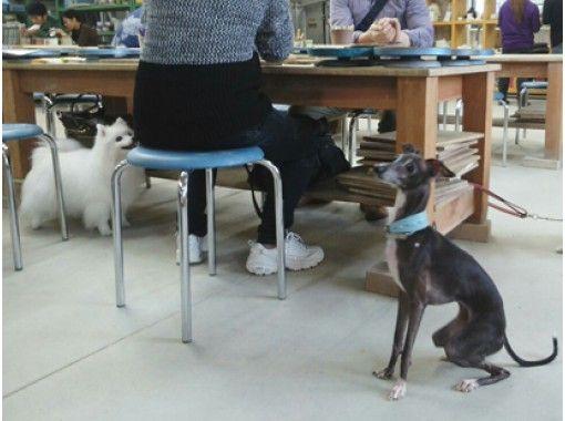 【滋賀・信楽】ペット同伴可!粘土1kgを使って贅沢に!3つの作品を作れる手びねり陶芸体験の紹介画像