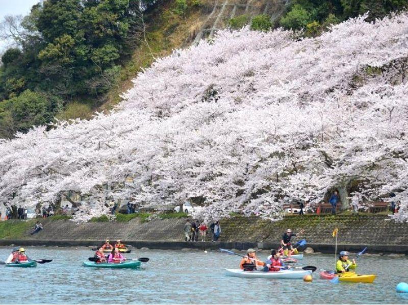 【滋賀】びわ湖お花見カヤックツアー 2017の紹介画像