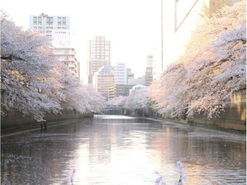 【東京・目黒川】お花見CHANDONクルーズ(目黒川コース乗合プラン)の紹介画像