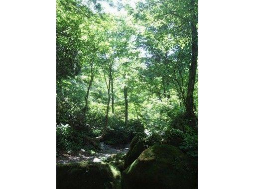 【富山・立山山麓】セラピーガイドがご案内!森林セラピー(ちょっこりコース)おやつ付き
