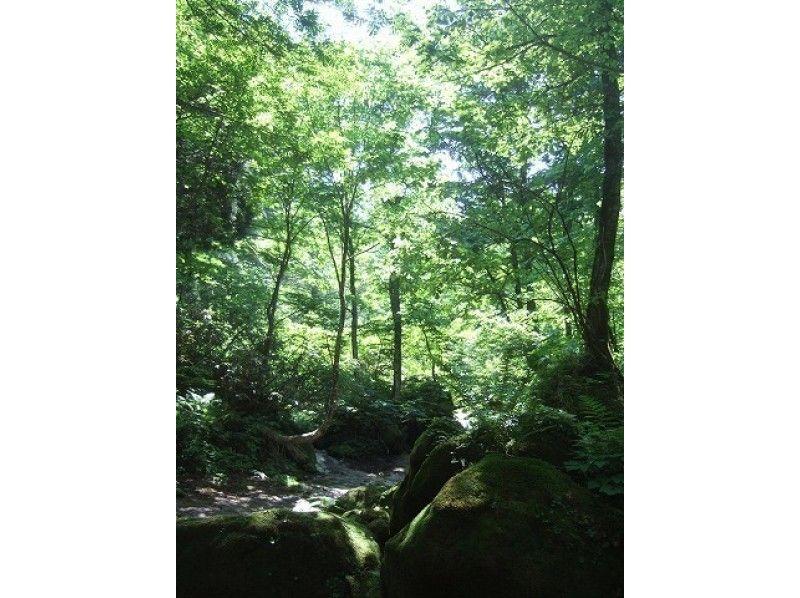 【富山・立山山麓】森林セラピー(ちょっこりコース)の紹介画像