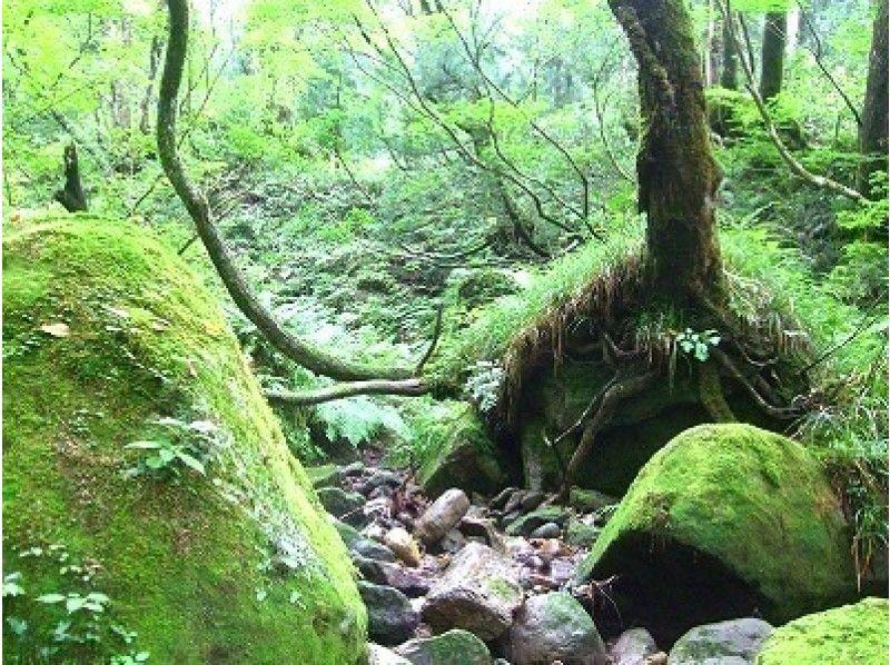 【富山・立山山麓】森林セラピー(たっぷりコース)の紹介画像