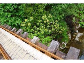 フォレストウォーク屋久島の画像