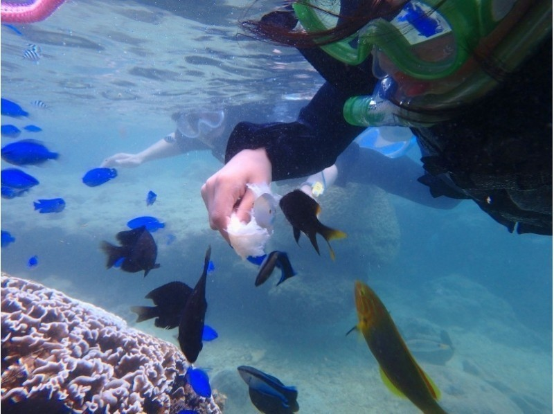 «Participation from Recommended »2-year-old family OK! Introduction image of sea Picnic & Snorkel