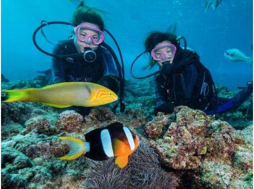 \乘船出发/蓝洞体验潜水!有饲养经验! +水族馆门票也打折♡の紹介画像
