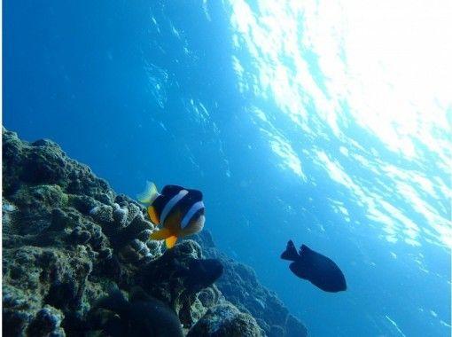 貸切ツアーで泳げない人も安心して楽しめる沖縄☆青の洞窟体験ダイビング 魚の餌付け&写真撮影付きの紹介画像