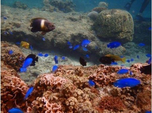 子供と海を満喫セットプラン☆青の洞窟シュノーケリング&キッズ体験ダイビング 魚の餌付け&写真撮影付きの紹介画像