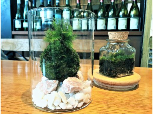 【東京・新宿御苑前駅】天然苔をお部屋に飾る⭐お洒落なグラス苔玉の紹介画像