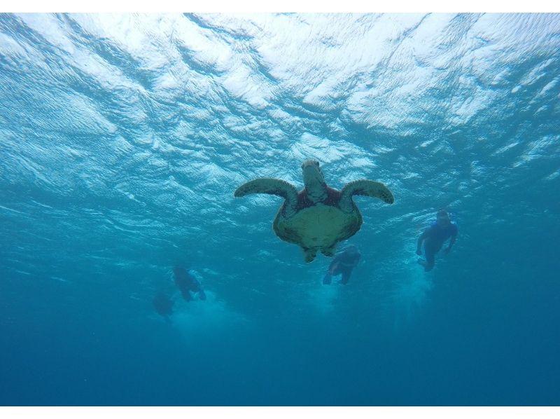 【沖縄・宮古島】WEB限定価格!満足度120%!ウミガメWシュノーケリング(午前・午後)の紹介画像