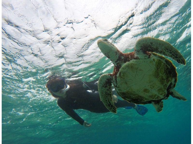 [沖繩宮古島] WEB限制價格!滿意度120%!海龜的簡介圖像W'潛水(上午和下午)