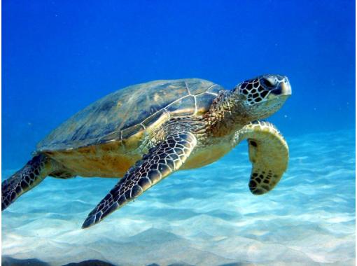 【照片资料展示】幻影岛登陆&珊瑚礁浮潜&蝠鲼或海龟浮潜【石垣岛一日游】の紹介画像