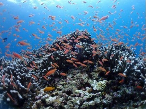 シージャック石垣島(SeaJack divefamily)の画像