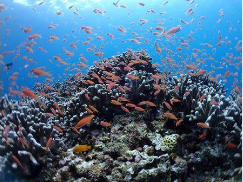 一番人気のコース!サンゴ礁体験ダイビング&マンタスノーケル半日コース(AM or PM)の紹介画像