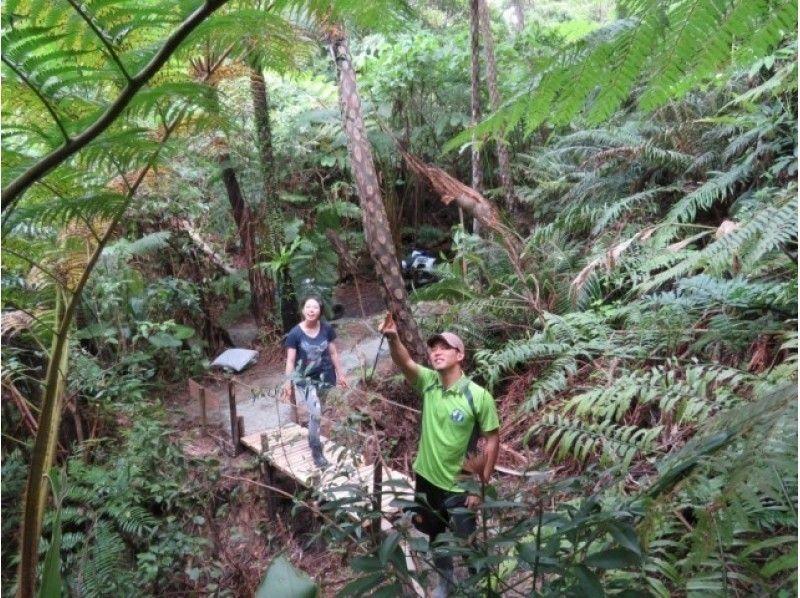 【沖縄・名護】4輪バギーでやんばるの森を気持ちよく走る!散策タイムもあり[バギーライドツアー]の紹介画像