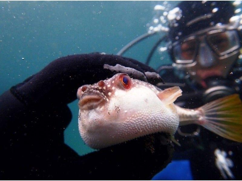 [神奈川縣,三浦半島]初學者的歡迎!城島島潛水經驗介紹的形象,還可以燒烤
