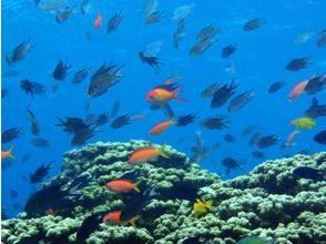 ダイビングスクール 海講座(Diving School Umicoza)の画像