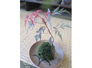 hanayuki(ハナユキ)の画像