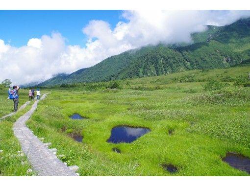 【富山・立山】立山めぐりトレッキング(弥陀ヶ原コース)高山植物や蝶を観察する湿地ガイドウォーク
