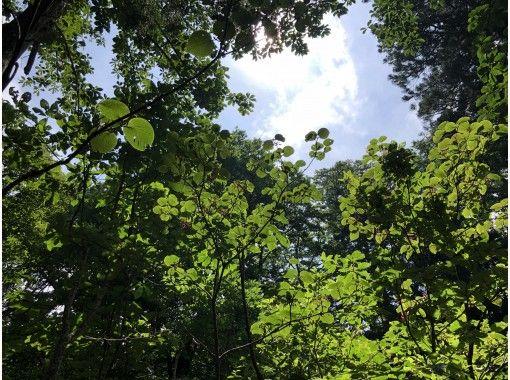 【富山・立山】立山めぐりトレッキング(美女平コース)立山杉の巨木やブナ林で森林浴ガイドウォーク