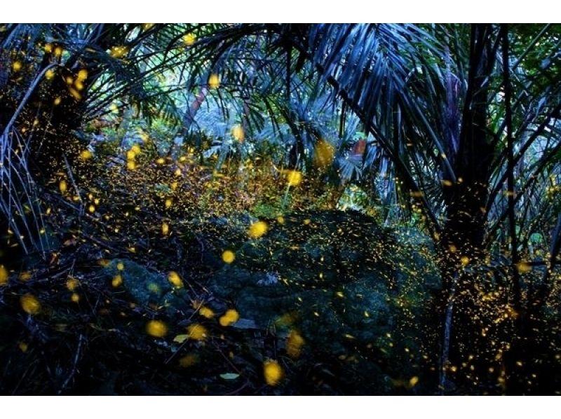 【沖縄・石垣島】ナイトウォッチング夜のエコツアーで石垣島の星空を見に行こうの紹介画像