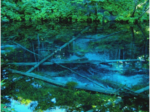 【北海道・知床】MTB裏摩周・神の子池ダウンヒルツーリング