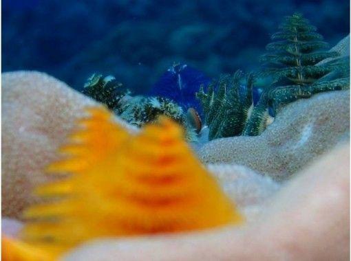【沖縄・恩納村】水中撮影orカメラレンタル無料!オーダーメイド型ファンダイビング