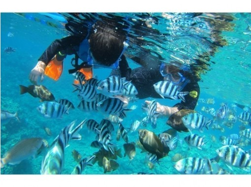 HIS Super Summer Sale in progress! !! [Participation is OK from 2 years old! Blue cave boat snorkeling tour] Photo gift, free feedingの紹介画像