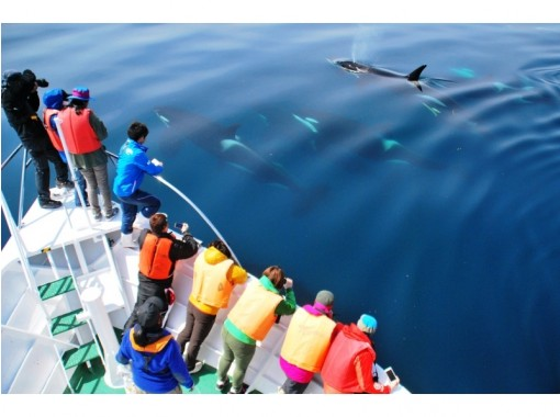 【北海道・知床】大自然の海でクジラやイルカに出会える!未体験のクルージングの旅へ