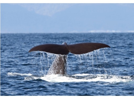 【北海道・知床】大自然の海でクジラやイルカに出会える!未体験のクルージングの旅への紹介画像