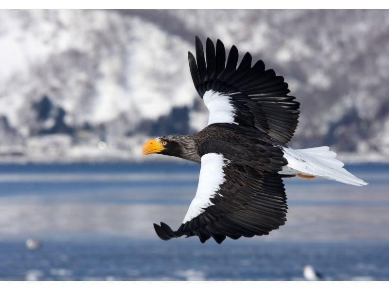 [Hokkaido Shiretoko] feel free to experience! Ice floe cruising & Bird watching 1 hour course 13 o'clock departure of introduction image