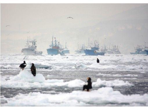【北海道・知床】気軽に体験!流氷クルージング&バードウォッチング(13時出港/1時間コース)の紹介画像