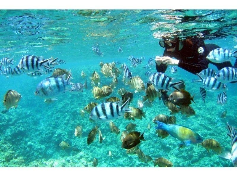 【ボートで行く青の洞窟シュノーケリング&体験ダイビング】ツアー写真プレゼント・餌付け付き・快適なボーの紹介画像