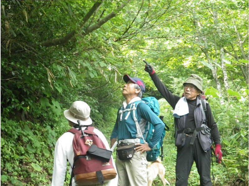 【富山・八尾】お弁当付!八尾から登る金剛堂山トレッキングの紹介画像