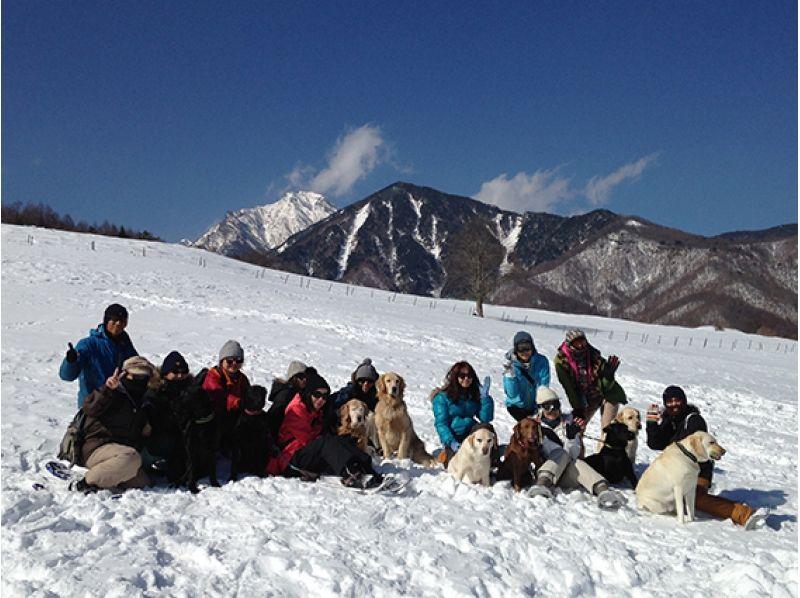 [Yamanashi Yatsugatake] dogs and snowshoe hiking ※ lunch box with ♪ Introduction image