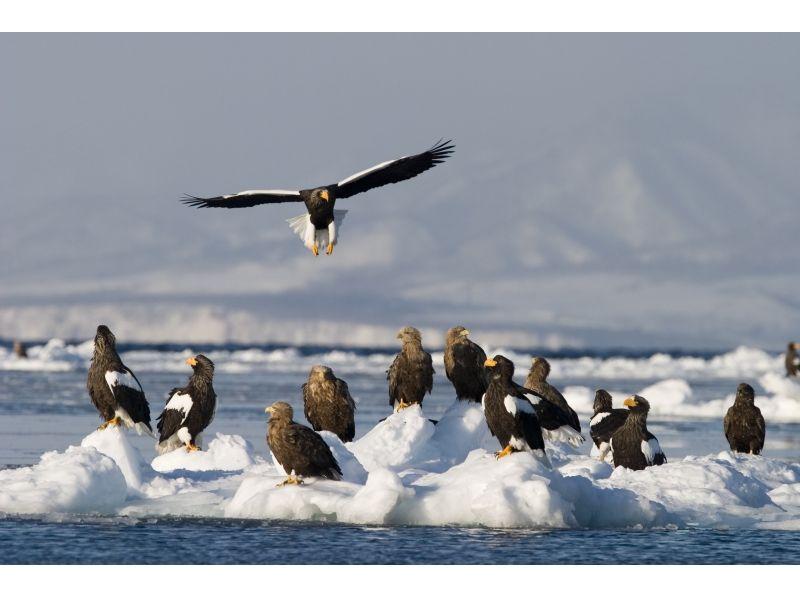 Meet in Hokkaido, Shiretoko] winter of spectacular scenery in the Shiretoko. Ice floe cruising & Bird Watching shooting course of introduction image