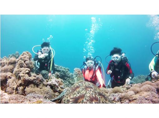 【福岡】体験ダイビング!【海まで往復送迎付き】