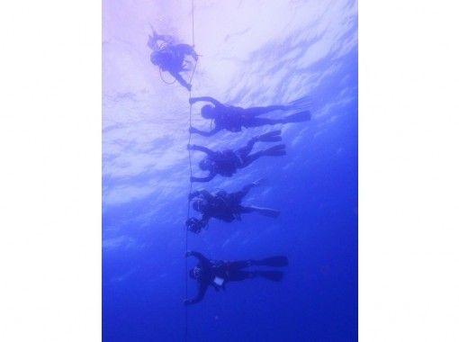【福岡】体験ダイビング!【海まで往復送迎付き】の紹介画像