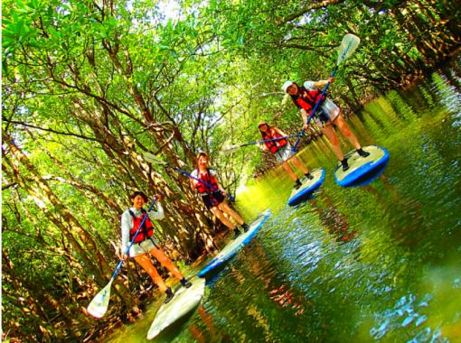 [World Heritage Iriomote Island Half Day] To the unexplored power spot! Mangrove SUP / canoe x jungle exploration x unexplored power spot tour [Tour photo data free]の紹介画像