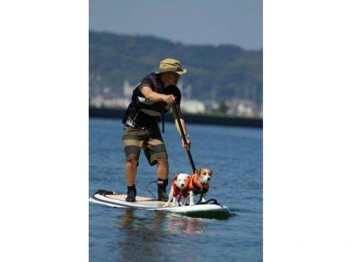 【静岡・清水】愛犬と一緒に!SUP(スタンドアップパドル)レッスン