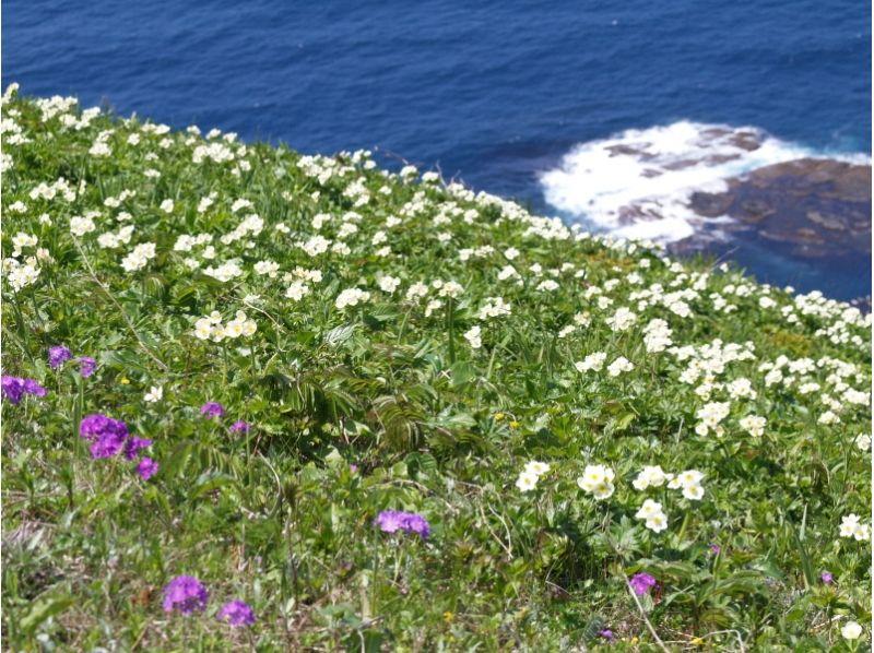 【北海道・礼文島】礼文島、夕方のお花を満喫 夕方お散歩コースガイドの紹介画像