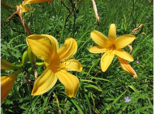 【長野・霧ヶ峰】体力に合わせてご案内!季節の花々や景色をゆったりと楽しむ!霧ヶ峰ハイキング