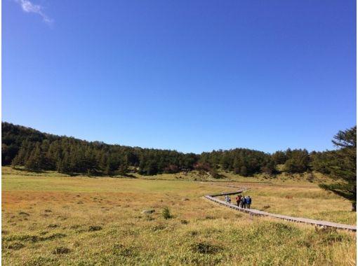 [Nagano/ Ikenohira Marsh] Growing popularity! Slowly appreciate the plants blooming in the marshland! Pond Plains Marsh Flower Hikeの紹介画像