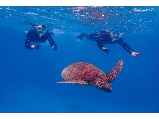 [Yakushima Snorkeling] I want to meet my longing sea turtle! Snorkeling tour to swim with sea turtles!の紹介画像